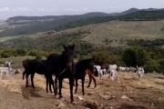 fiera-cavalli-roma-1