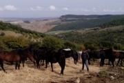 fiera-cavalli-roma-2