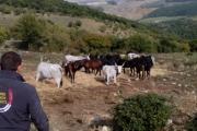 fiera-cavalli-roma-3