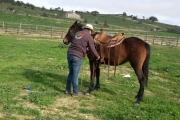 fiera-cavalli-roma-4