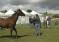 Itinerari a cavallo