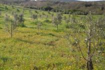 Ruolo terreni e bestiame anno 2014