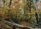 Il faggeto di Allumiere è stato riconsosciuto come monumento naturale