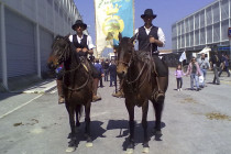 Il cavallo Tolfetano