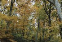 Il bosco e le sue storie
