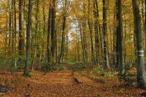 """II Bando di Gara – Asta pubblica vendita materiale legnoso ritraibile dai boschi ceduti matricinati denominati """"Monte Revello"""" e """"Macchia della Fontana"""""""