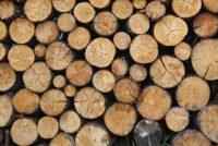 Avviso legna di uso civico prenotabile a partire dalle ore 9,30 del giorno 18 marzo 2021